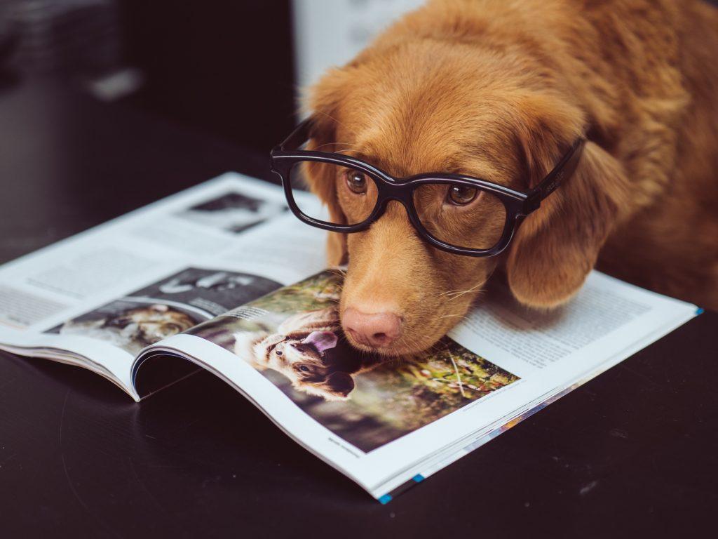 caine maro de talie medie cu ochelari negri sta cu botul pe o revista despre caini asezata pe o masa neagra