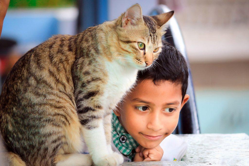 pisicile si copiii