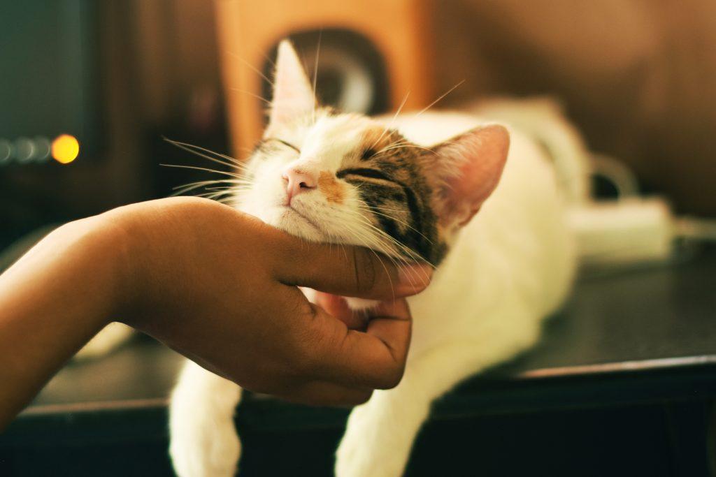 pisica mangaiere anti stres
