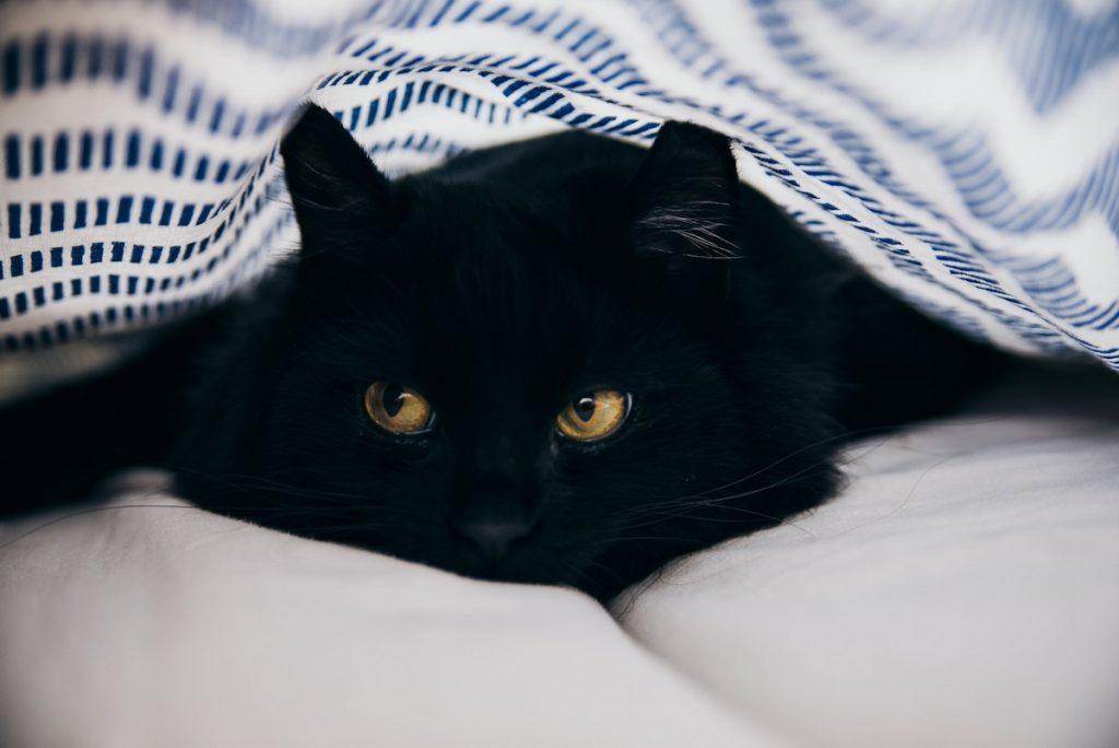 deparazitare pisica