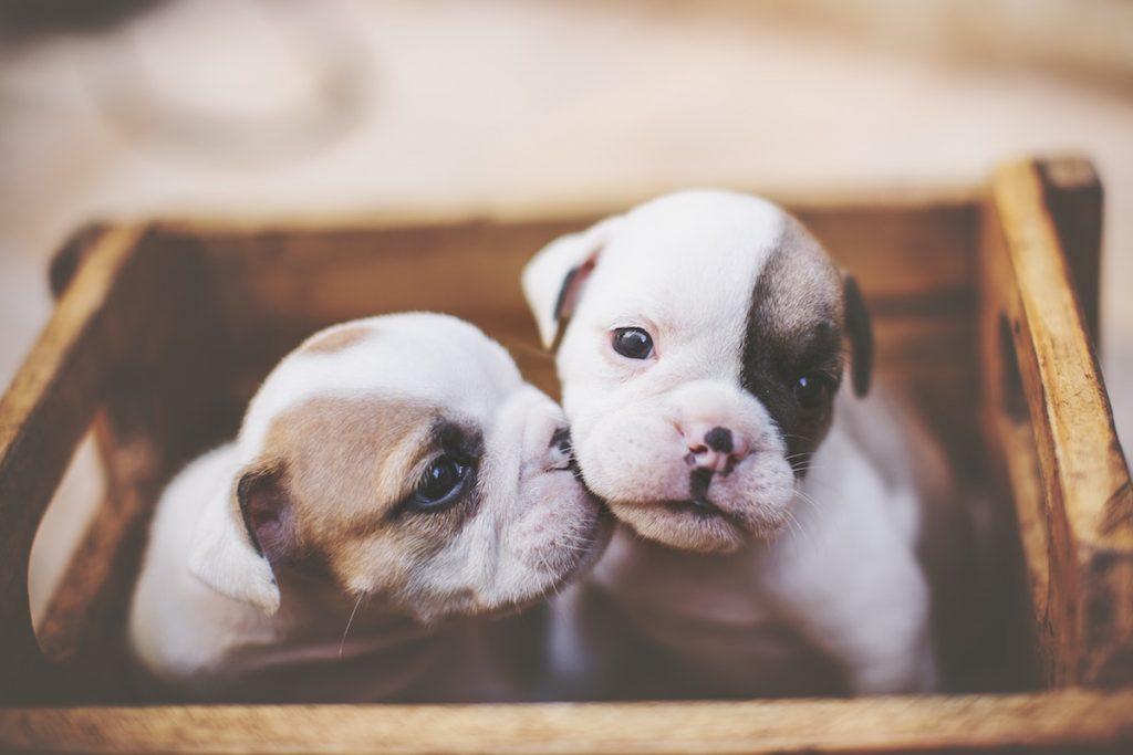 ваксинация на кученцето
