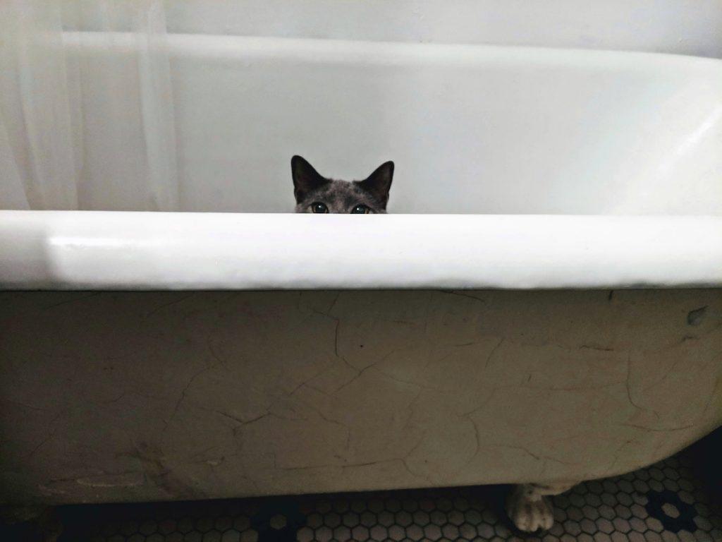 pisica si baia