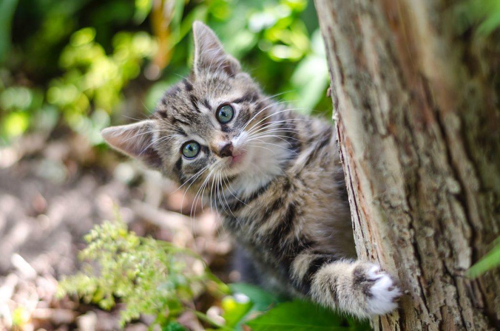 pisica in aer liber