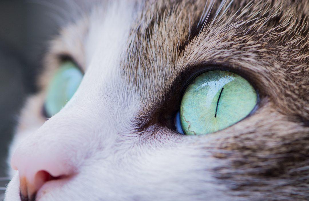 pisicile sunt despre vedere