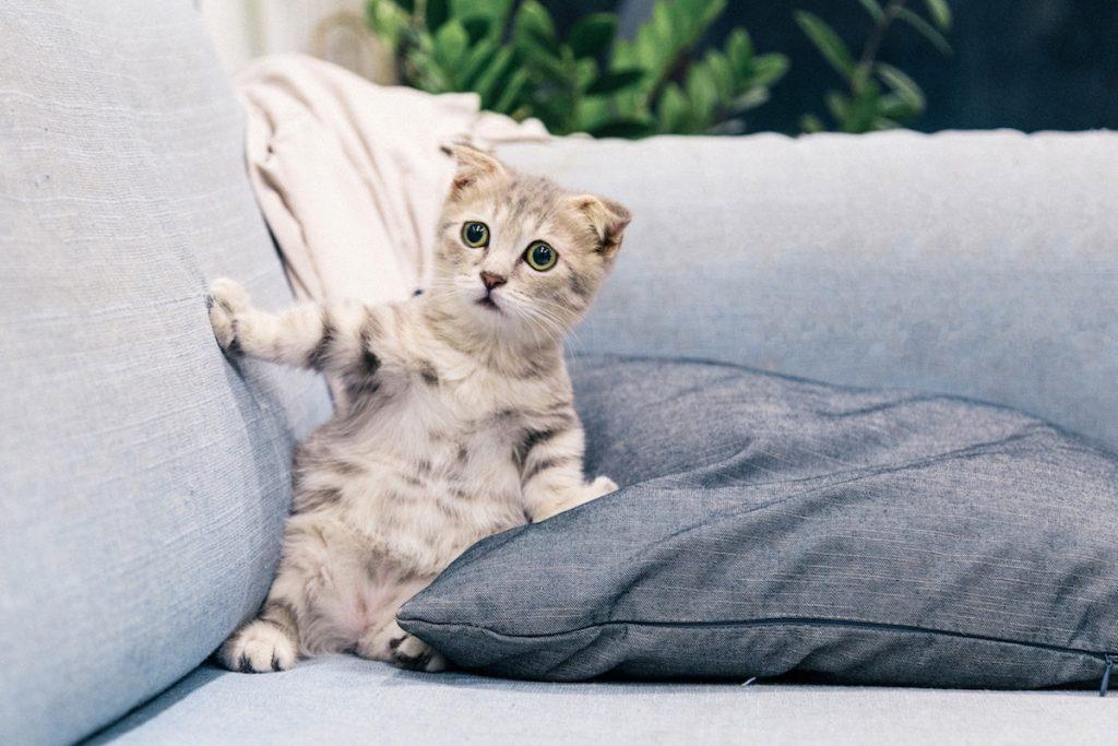 pui de pisica alb cu negru si maro, pe o canapea gri deschis cu perna gri inchis si o patura bej foarte deschis