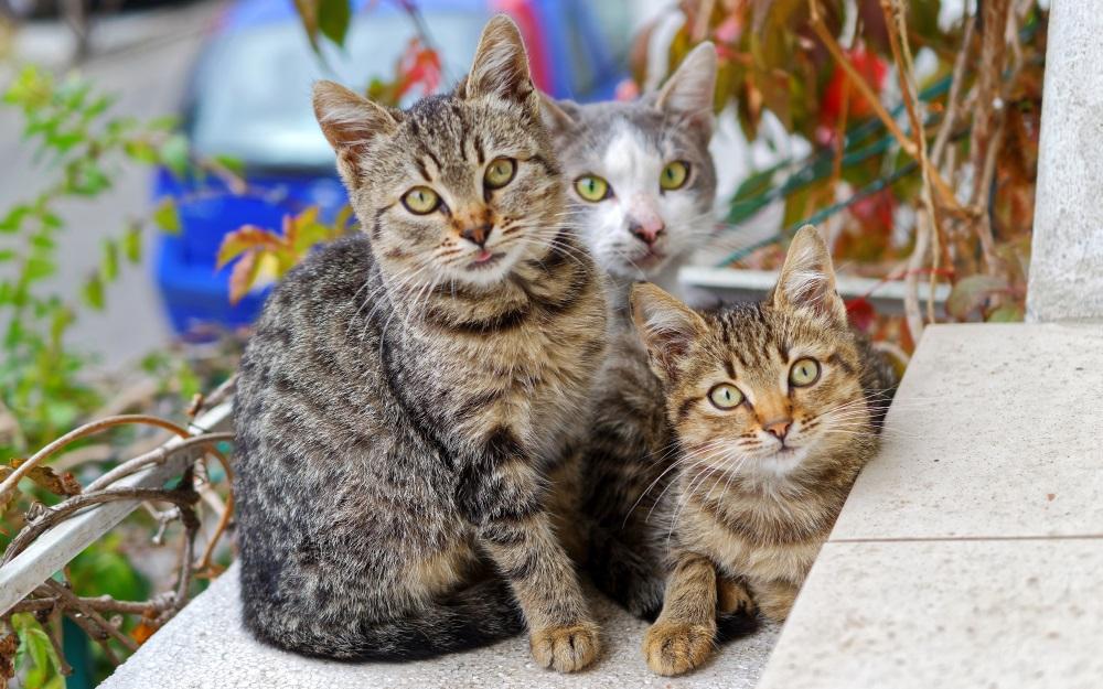 Ziua Internațională a Pisicii, animalul de companie ... |Ziua Internațională A Pisicii