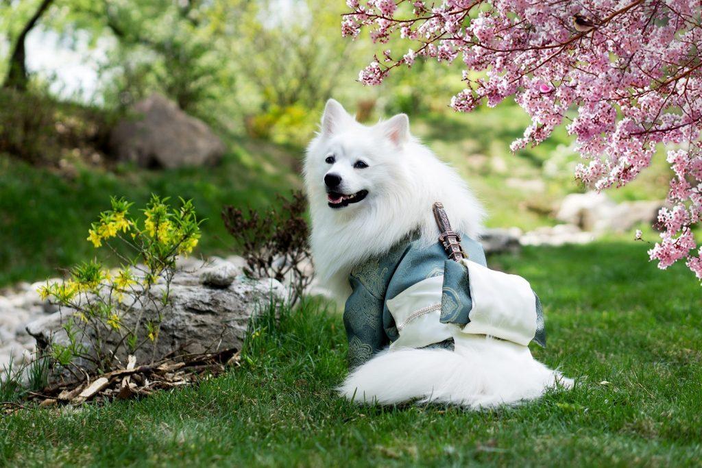 salus de câine cu varicoză
