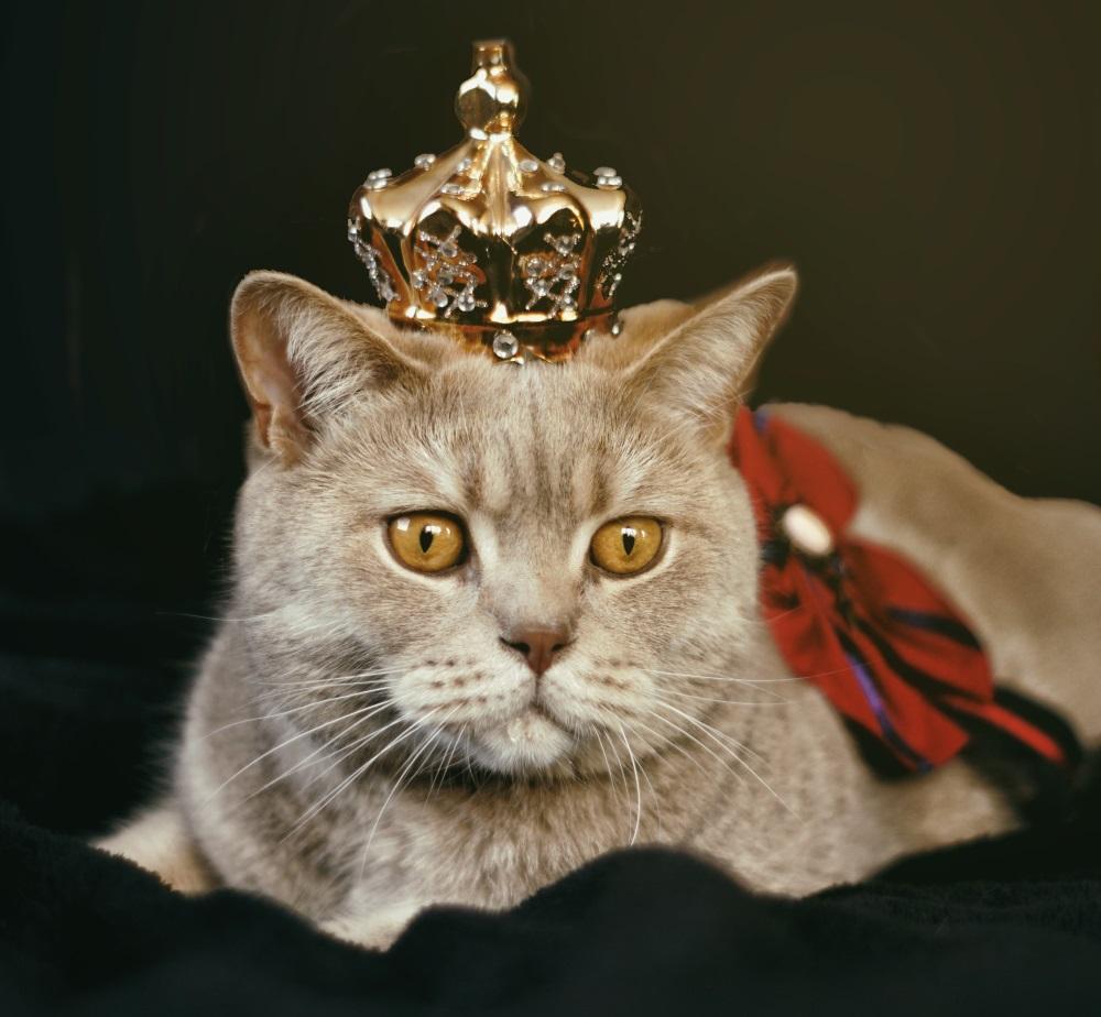 Ziua Internațională a Pisicii - Cele mai simpatice pisici ... |Ziua Internațională A Pisicii