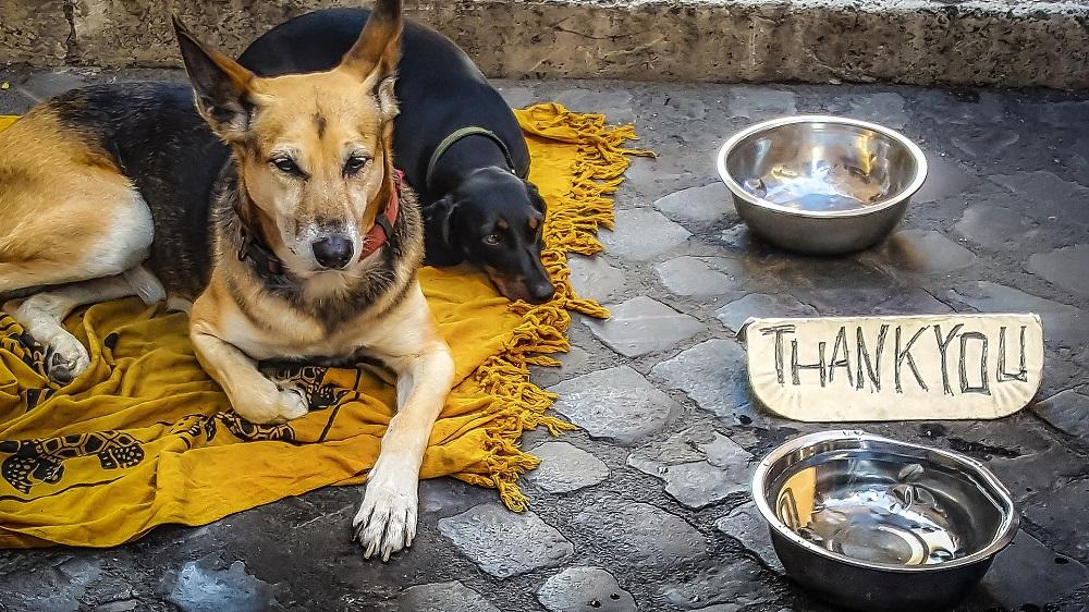 как живее бездомно куче