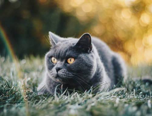 pisici care nu lasa par