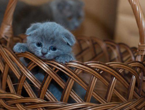 pui de pisica in cos
