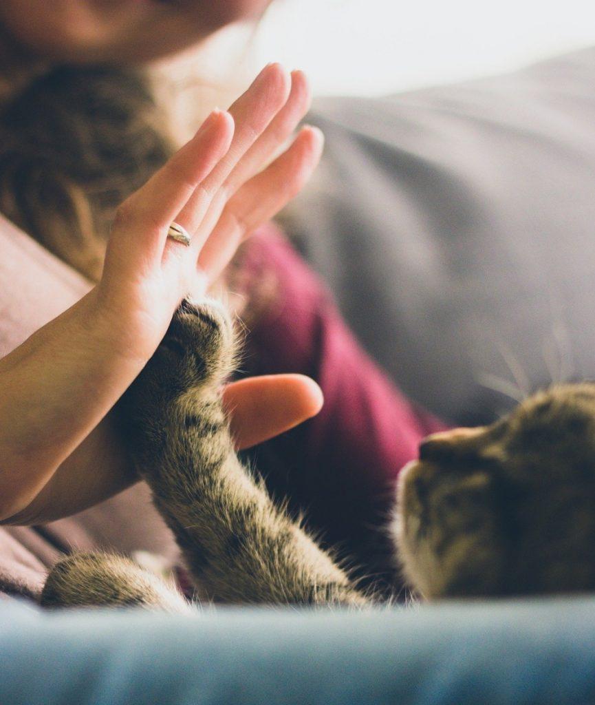 Femeie care se joaca cu labuta pisicii
