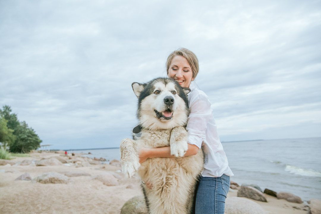 deparazitare interna si externa animale de companie primavara husky femeie plaja