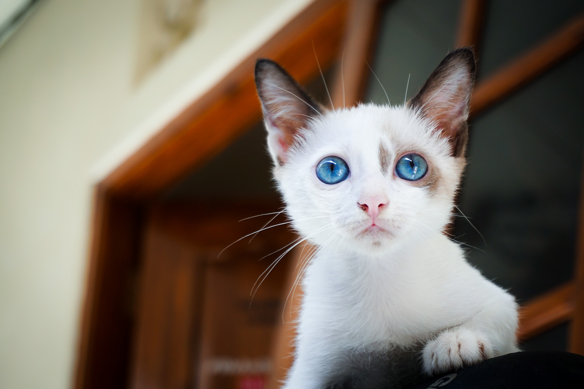 Cum să-ți faci pisica să piardă în greutate Obezitatea pisicii - Wamiz