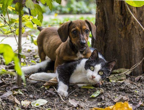 pisica alb cu negru si caine mic maro se joaca in natura