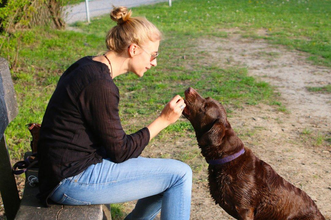 femeie de varsta mijlocie blonda oferind mancare unui caine de talie medie maro intr-un parc