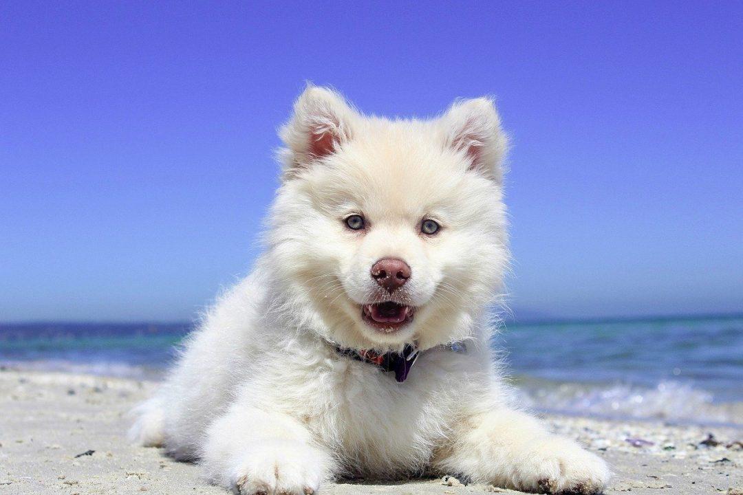 caine alb pe plaja cu marea pe fundal si cer albastru fara nori