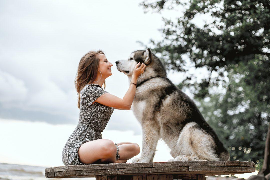 husky adult alaturi de o femeie pe o platforma din lemn