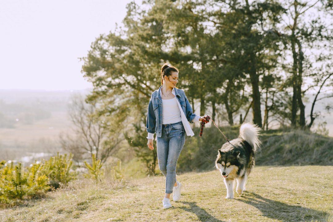Caine husky plimbat de stapana lui in natura