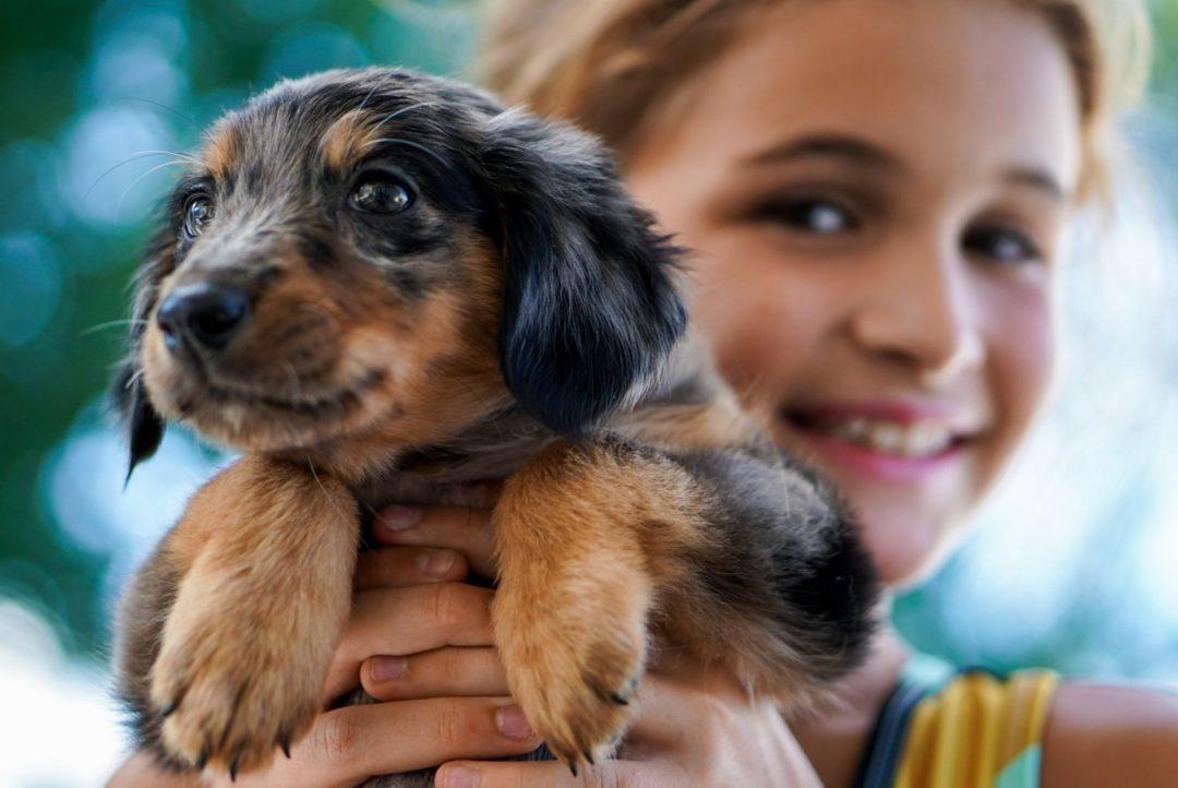 Cele mai populare nume de câini în 2021