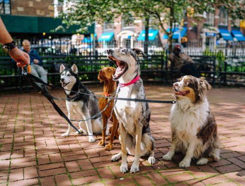 Top 10 mâncare pentru câini în 2021. Ce alegi pentru cel mai bun prieten