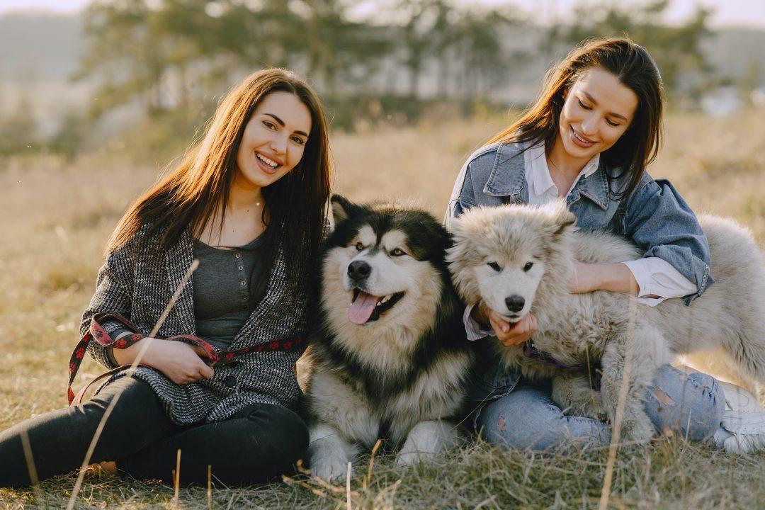 doua tinere cu doi caini de talie mare pe un camp