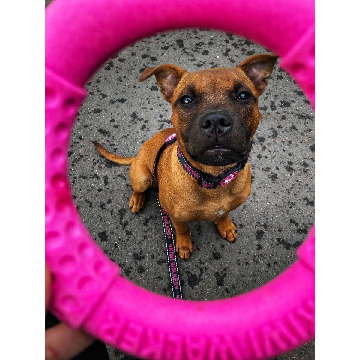 Jucărie Cerc Roz de la Kiwi Walker