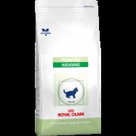 Dieta Royal Canin Pediatric Growth Cat Dry 2kg